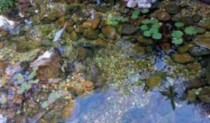 helder water vijver - kwaliteit vijverwater