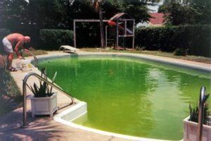 groen water in zwemvijver