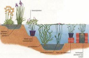 vijver ontwerpen: beplantingsplan