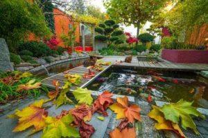 onderhoud vijver herfst