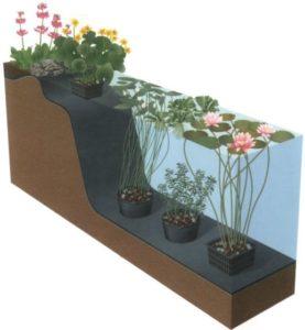 Plantdiepte waterplanten en zuurstofplanten