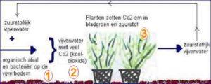 biologisch evenwicht: de kringloop in de vijver