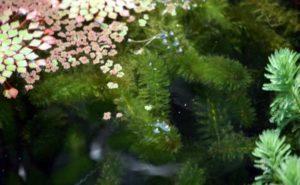 zuurstofplanten vijver CO2
