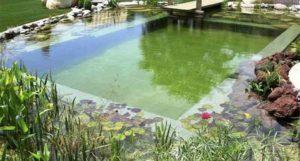 onderhoud zwemvijver - vijver met plantenfilter